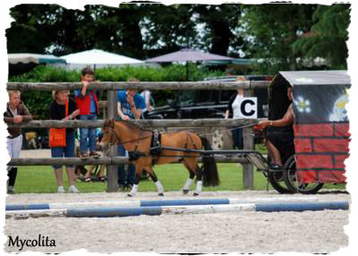 obstacle driving miniature horse