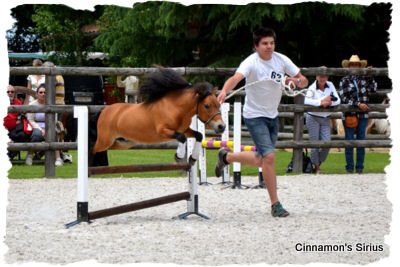 jumping cheval miniature